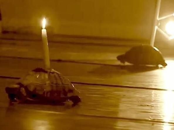 VIVE PROTESTE PER LE CANDELE ACCESE SULLE TARTARUGHE A TEATRO