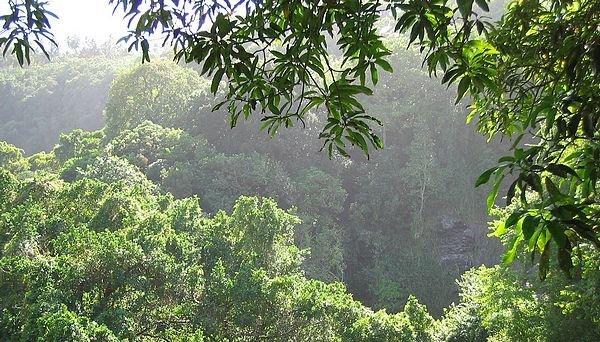 Le foreste del Mozambico e le aziende del legno italiane