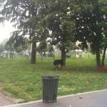 Parco Testori a Villapizzone: un pezzo di Milano diventa zona extraterritoriale