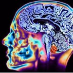Proteggere, nutrire, allenare il cervello per mantenerlo in forma: BRAINZONE spiega come